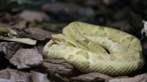 Schlangeninsel