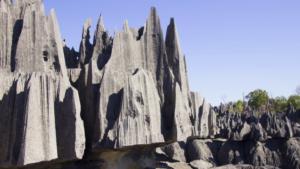 Steinwald-Madagaskar